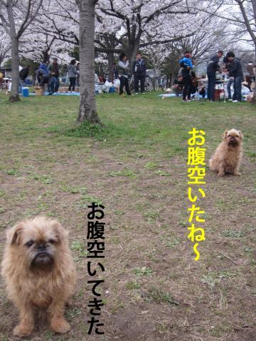 2_convert_20120410072113.jpg