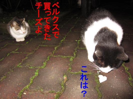 3-0_convert_20111208052907.jpg