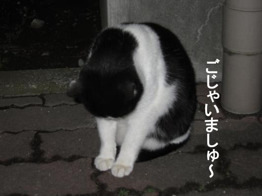 30_convert_20120101065859.jpg