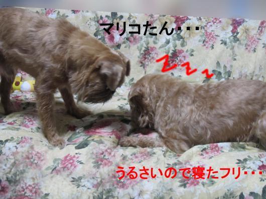 33_convert_20111124025136.jpg