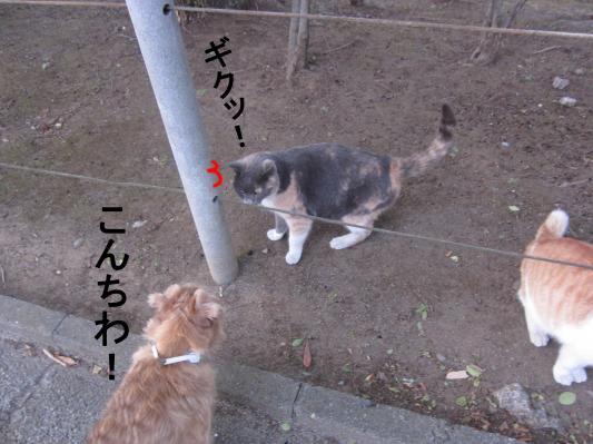 3_convert_20120203080855.jpg