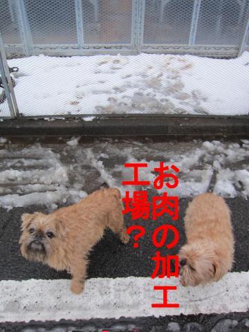 3_convert_20120301083315.jpg