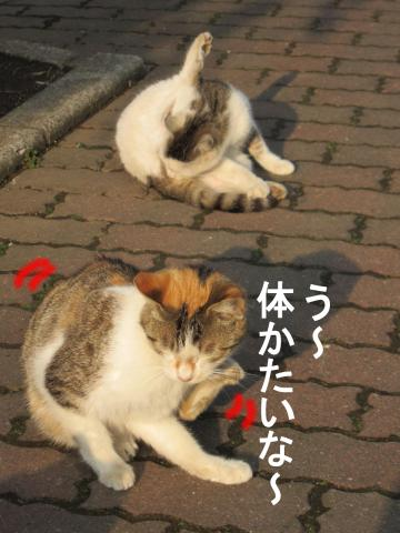3_convert_20120304083058.jpg