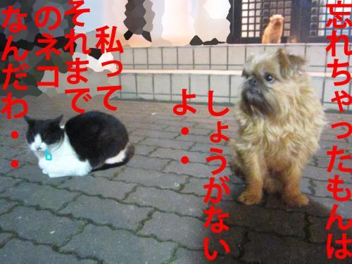 3_convert_20120308082801.jpg