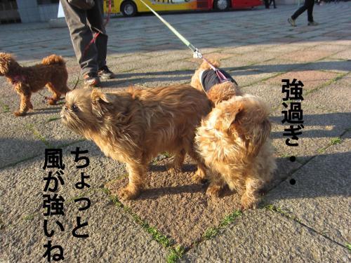 3_convert_20120328084142.jpg