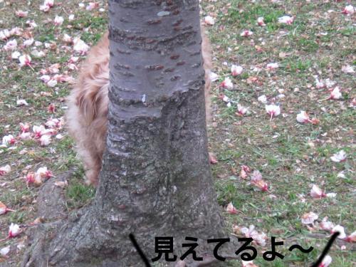 3_convert_20120421103417.jpg