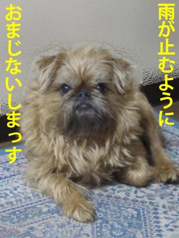 3_convert_20120423102329.jpg