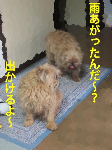 3_convert_20120424101416.jpg