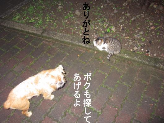4-0_convert_20120102063402.jpg