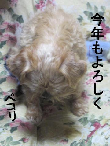 40_convert_20120101065924.jpg