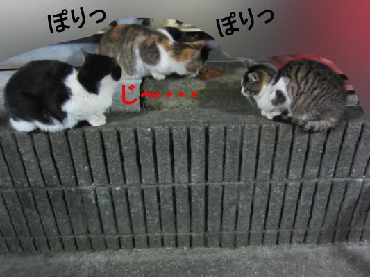 40_convert_20120209074917.jpg