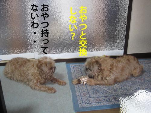 40_convert_20120412084909.jpg