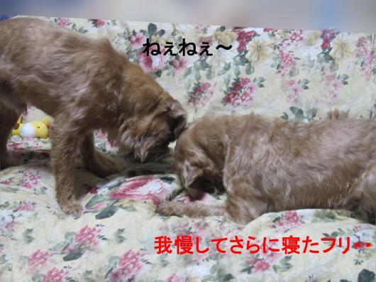 44_convert_20111124025157.jpg