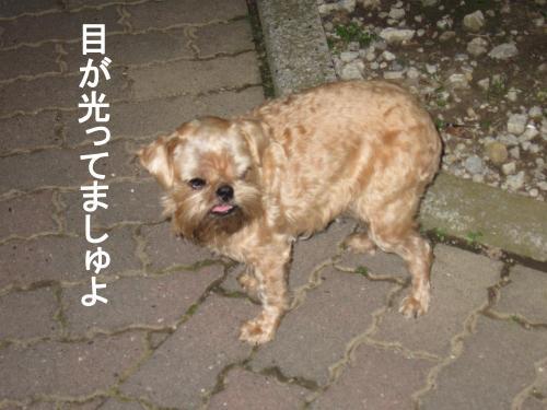 44_convert_20111130032005.jpg