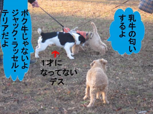 44_convert_20120103073347.jpg