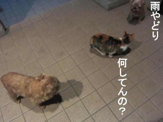 4_convert_20120122080658.jpg