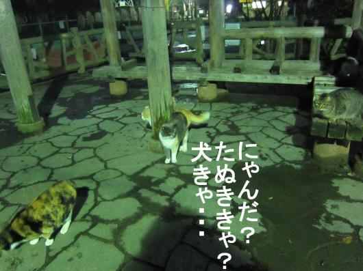 4_convert_20120123074921.jpg