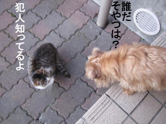 4_convert_20120131082456.jpg