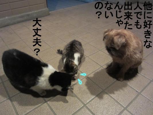 4_convert_20120201083837.jpg