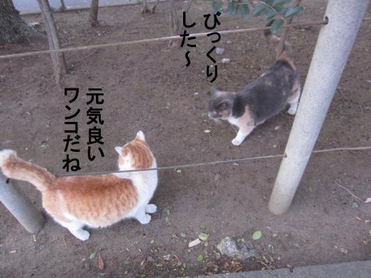 4_convert_20120203080911.jpg
