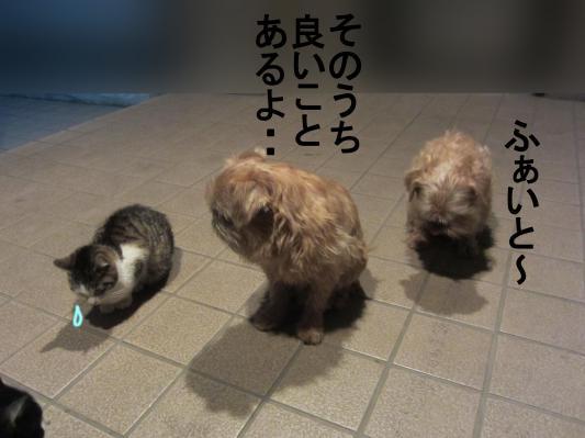 4_convert_20120208082150.jpg