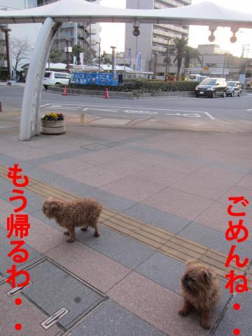4_convert_20120326091726.jpg