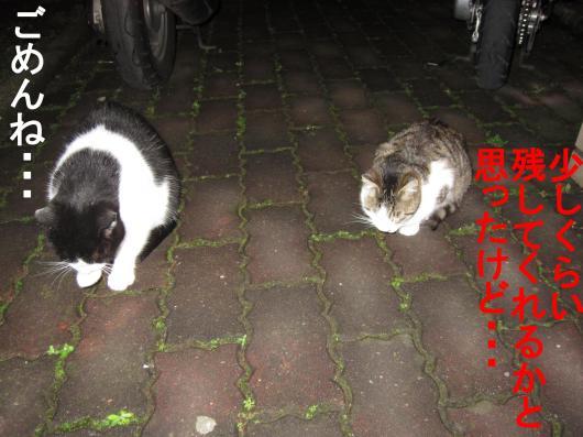 5-0_convert_20111208052946.jpg