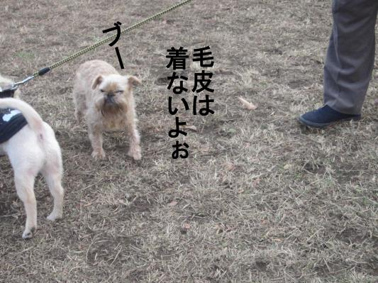 5-0_convert_20120109151703.jpg