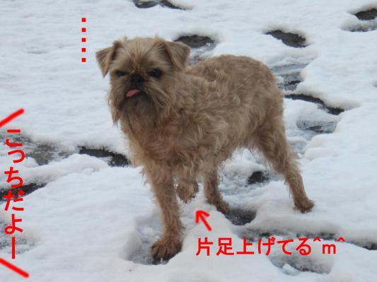 5-0_convert_20120125075147.jpg