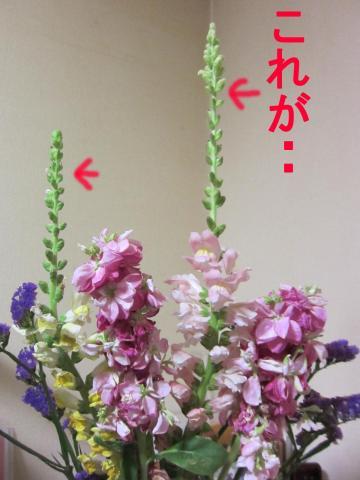 5-0_convert_20120228084008.jpg