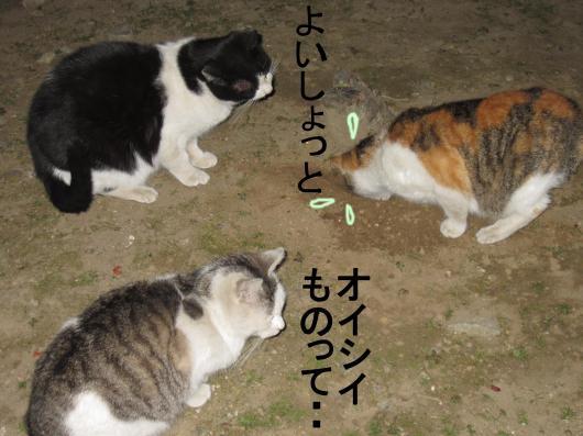 50_convert_20120120075419.jpg