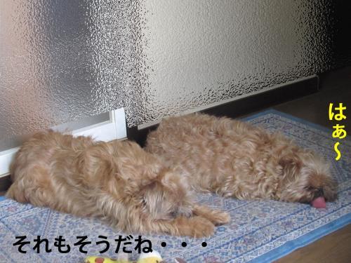 50_convert_20120420094016.jpg