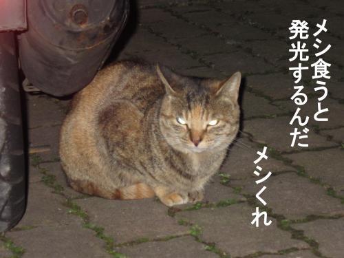55_convert_20111130032024.jpg
