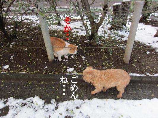 5_convert_20120126075635.jpg