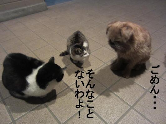 5_convert_20120201083852.jpg