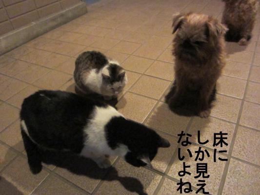 5_convert_20120202084742.jpg