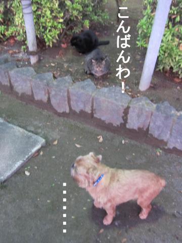 5_convert_20120203080936.jpg