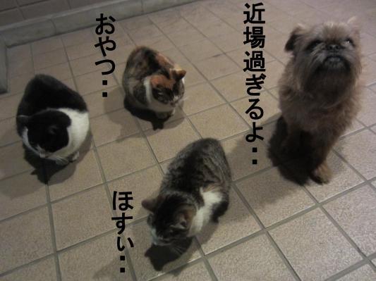 5_convert_20120207080851.jpg