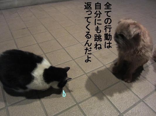 5_convert_20120208082214.jpg