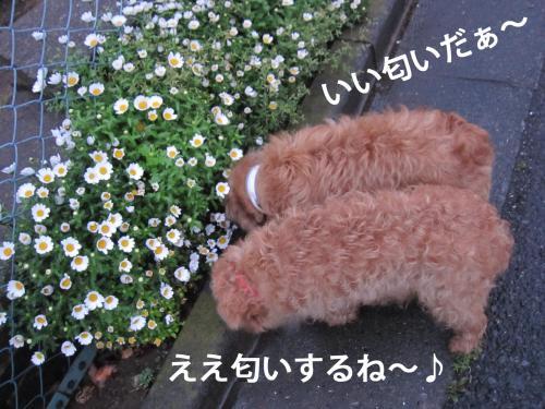 5_convert_20120424101452.jpg