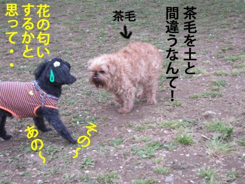 5_convert_20120425103126.jpg