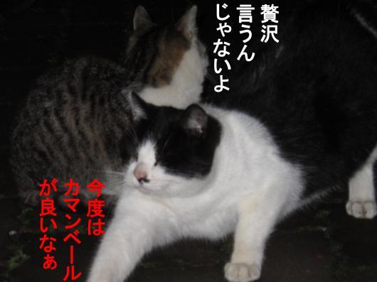 6-0_convert_20111208053002.jpg