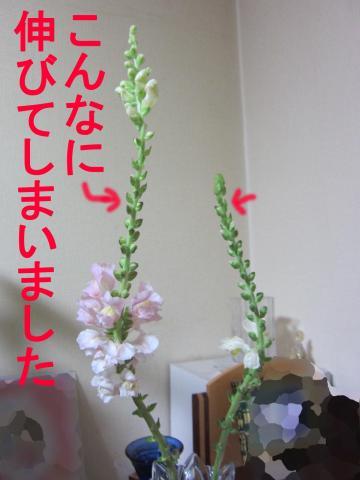 6-0_convert_20120228084026.jpg