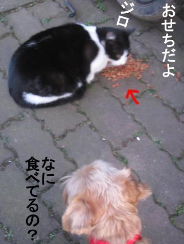 60_convert_20120101070012.jpg