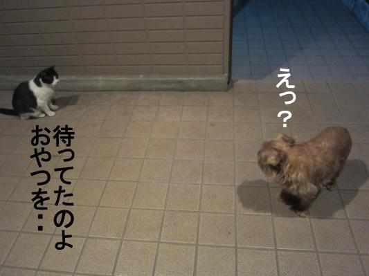 60_convert_20120209081522.jpg