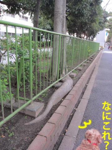 60_convert_20120327084719.jpg