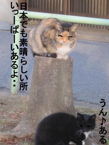 66_convert_20120220084720.jpg