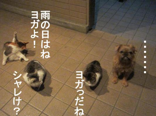 6_convert_20120122080715.jpg