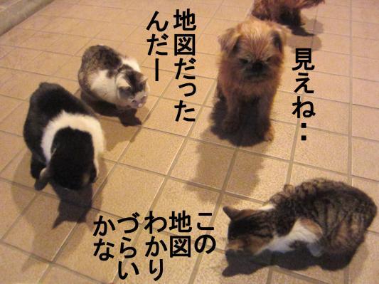 6_convert_20120202084756.jpg