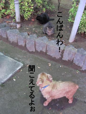 6_convert_20120203161517.jpg